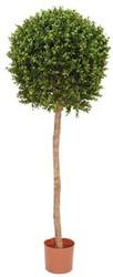Kunst Buxus op stam 140cm groen